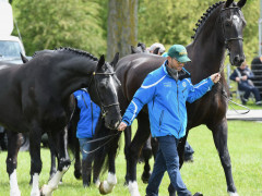 RWHS Horseinspection by Karolina Sw  rdh  2