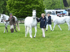 RWHS Horseinspection by Karolina Sw  rdh  11