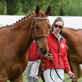 RWHS Horseinspection by Karolina Sw  rdh  15