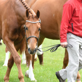 RWHS Horseinspection by Karolina Sw  rdh  16