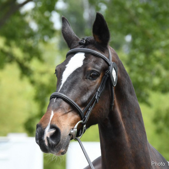 RWHS Horseinspection by Karolina Sw  rdh  17