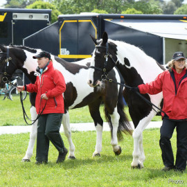 RWHS Horseinspection by Karolina Sw  rdh  9