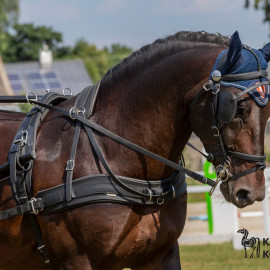 CAN Boguslawice POL   Dressage   69