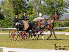 CAN Boguslawice POL   Dressage   80
