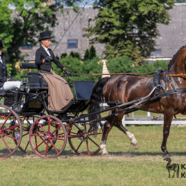 CAN Boguslawice POL   Dressage   81