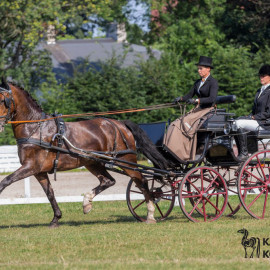 CAN Boguslawice POL   Dressage   82