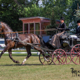 CAN Boguslawice POL   Dressage   83