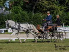 CAN Boguslawice POL   Dressage   85