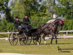 CAN Boguslawice POL   Dressage   87